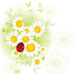 Chamomile floral background Stock Images