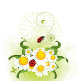 Chamomile  Floral design Royalty Free Stock Image