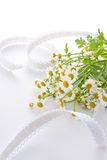 Chamomile flower. On white silk cloth Royalty Free Stock Photo