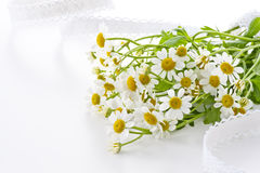 Chamomile flower. On white silk cloth Royalty Free Stock Image