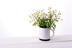 Chamomile flower. In cup on table Royalty Free Stock Images
