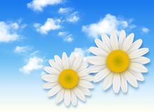 Chamomile flower and blue sky vector illustration