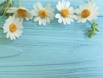 Chamomile flower border on a blue background season bouquet. Chamomile flower bouquet on a blue background frame season border stock images
