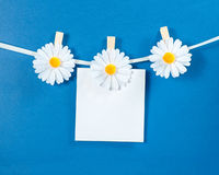 Chamomile flower clothespins with blank paper on blue background Stock Image