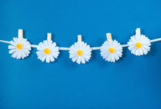 Chamomile flower clothespins decoration on blue background Stock Image