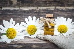 Chamomile flower essential oil. Naturopathy. Herbal medicine stock photo