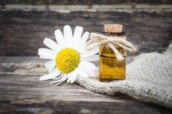 Chamomile flower essential oil. Naturopathy. Herbal medicine stock images