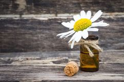 Chamomile flower essential oil. Naturopathy. Herbal medicine royalty free stock photo