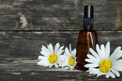 Chamomile flower essential oil. Herbal medicine. Chamomile flower essential oil. Naturopathy. Herbal medicine royalty free stock images