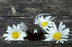 Chamomile flower essential oil. Herbal medicine. Chamomile flower essential oil. Naturopathy. Herbal medicine royalty free stock photo