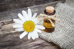 Chamomile flower essential oil. Naturopathy. Herbal medicine royalty free stock images
