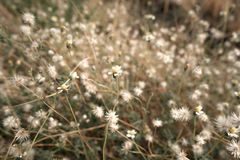 Chamomile flower field under warm sunlight. Heartwarming background. Copy space royalty free stock images