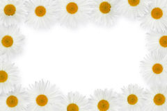 Chamomile flower frame Royalty Free Stock Photo