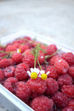 Chamomile flower on a fresh raspberries Stock Photos
