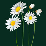 Chamomile flower mint leaves composition isolated on green background vector illustration