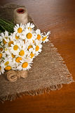 Chamomile flower on napkin Stock Images