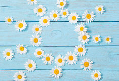 Chamomile  flower over  wooden background Royalty Free Stock Photography