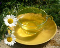 Chamomile flower tea Stock Photos