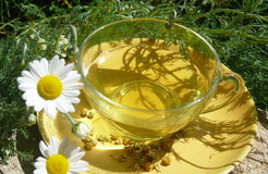 Chamomile flower tea Royalty Free Stock Photo