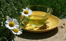 Chamomile flower tea Royalty Free Stock Photography