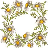 Chamomile flower vector frame. On white background Royalty Free Stock Photos