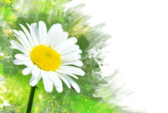 Chamomile flower.Watercolor effect Stock Photography