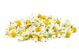 Chamomile Flowers. Isolated on white Royalty Free Stock Photo