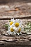 Chamomile flowers. Group of organic chamomile flowers Stock Image