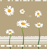 Chamomile flowers. Vector chamomile flowers isolated on the background Royalty Free Stock Photos