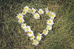 Chamomile flowers as a shape of heart on green grass Royalty Free Stock Photography
