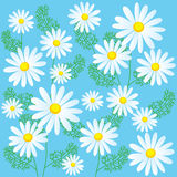 Chamomile Flowers On A Blue Background. Seamless Vector Illustrations. Chamomile Flowers For Sale. Stock Image