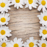 Chamomile flowers border on wooden background Royalty Free Stock Photo