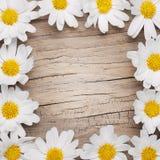 Chamomile flowers border on wooden background Royalty Free Stock Photo