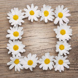 Chamomile flowers border on wooden background Stock Photos