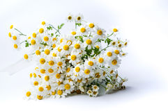 Chamomile flowers bouquet on white background Stock Photos