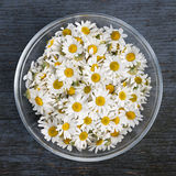 Chamomile flowers in bowl Royalty Free Stock Image