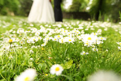 Chamomile flowers with bride and groom in the background Stock Photography