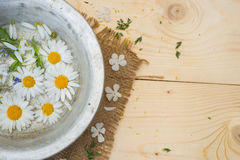 Chamomile flowers in a cup Stock Photography