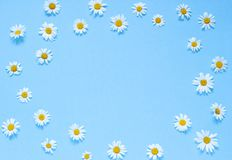 Chamomile flowers frame on the blue background. Top view. Copy space. Chamomile flowers frame on the blue background. Top view composition. Copy space Stock Photography