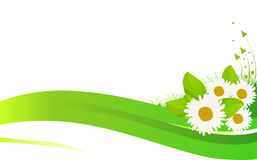Chamomile flowers in green grass illustration Stock Images