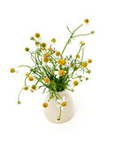 Chamomile flowers isolated on white Royalty Free Stock Photo