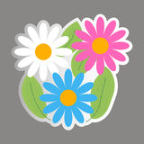 Chamomile - flowers, leaves. Vector sticker Stock Image