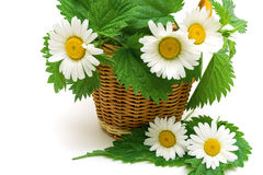 Chamomile flowers and nettle leaves in a wicker basket closeup Stock Image