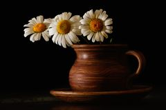Chamomile in a clay cup. Chamomile flowers in old clay cup Royalty Free Stock Images