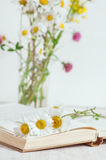 Chamomile flowers in open book Stock Images