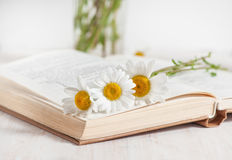 Chamomile flowers in open book Stock Image