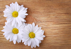 Chamomile flowers over old wood background. Stock Photo