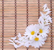 Chamomile flowers with petals Royalty Free Stock Photos