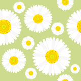 Chamomile flowers seamless Stock Images