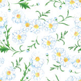 Chamomile flowers seamless vector print Royalty Free Stock Image
